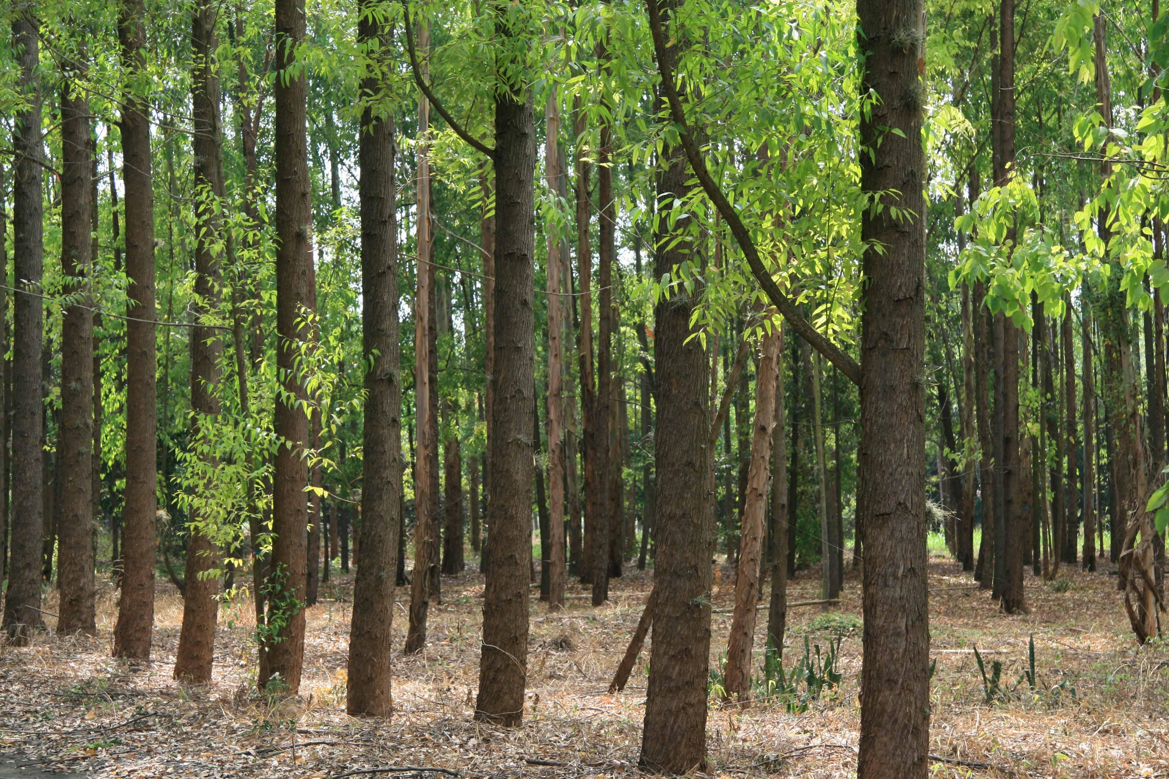 Is corrugated board sustainable? | Corrugated Packaging | Saxon Packaging | Sustainable Packaging | Woodland | Trees | Forestry